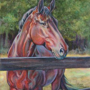 Artist Robyn Ryan watercolor equine portrait of Dan
