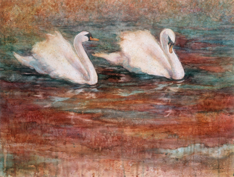 Watercolor painting of two Swans