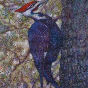 Pileated wood pecker on tree trunk