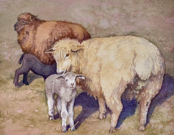 Robyn Ryan Artist watercolor demoEwes & Lambs